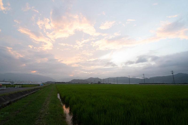 田んぼ道を散歩